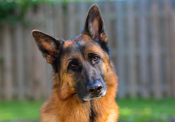 dog-breeding