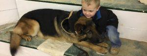 German Shepherd playing with child