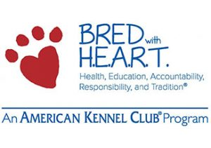GSD puppies bred with heart