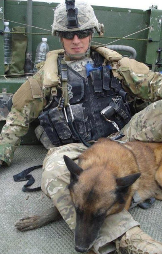 German Shepherd on active duty