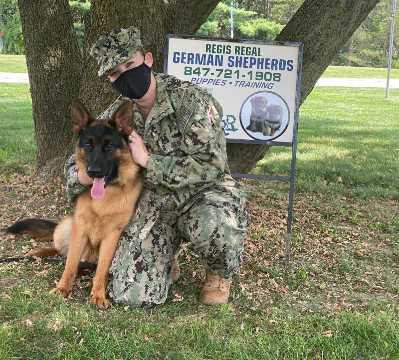GSD with Veteran in Spring Grove, Illinois