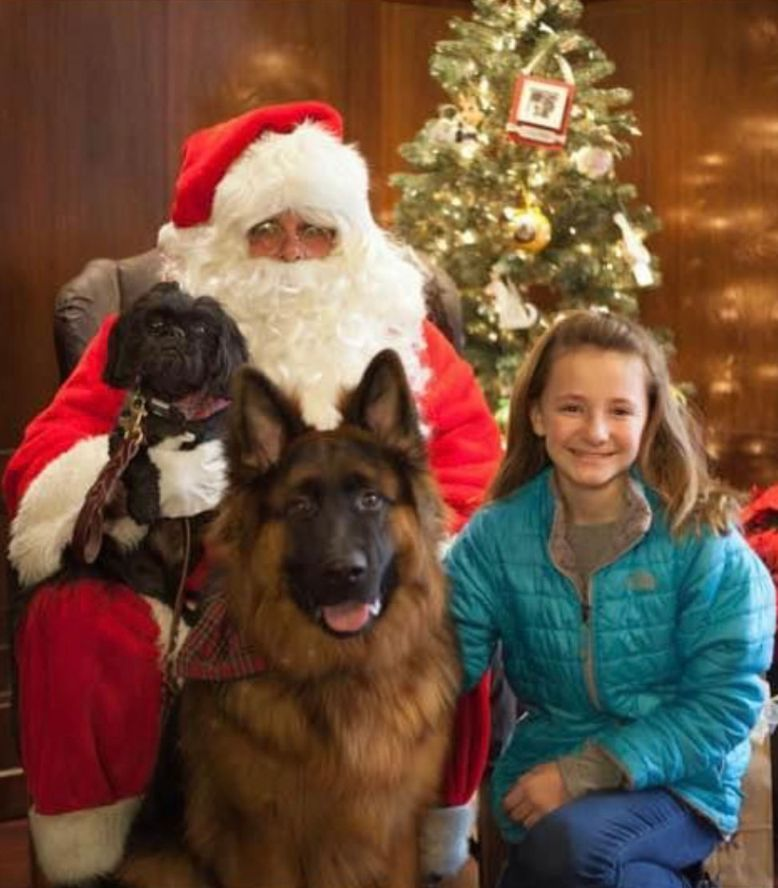 Longcoat German Shepherd with Santa