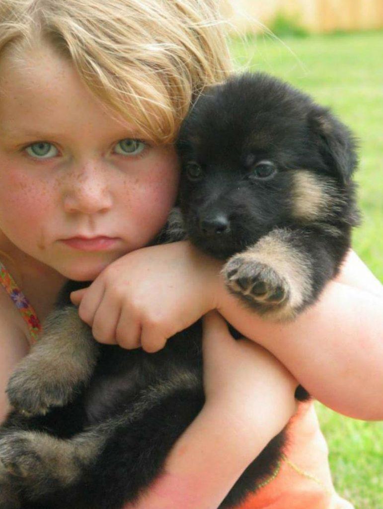 German Shepherd puppy with child