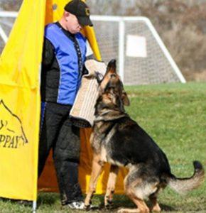 Schutzhund training