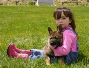 Puppy after Schutzhund training