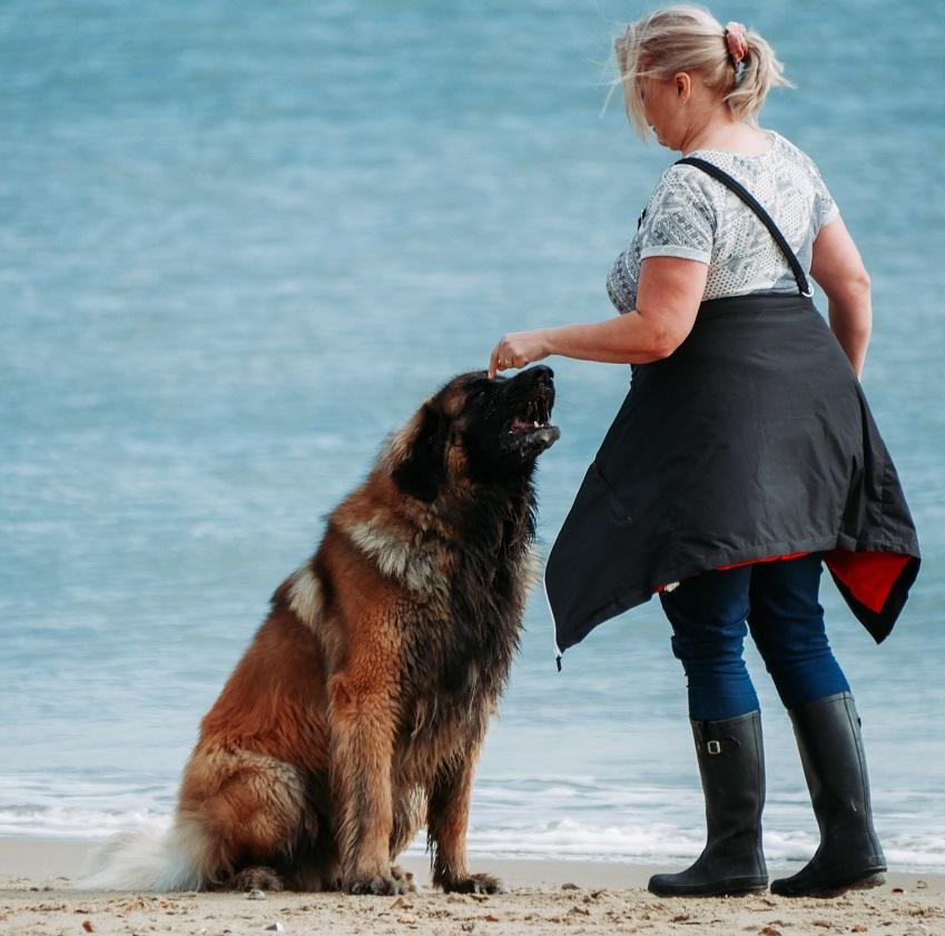 Exercise for older German Shepherds